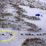 O Exemplo dos Lobos: Liderança