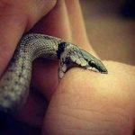 Reflexão: a cobra e o homem